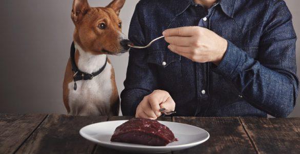 Hundefutter selbst gemacht