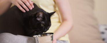Katzenfutter selbst gemacht